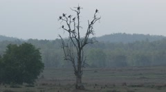 Stock Video Footage of Vulture Many Roosting Dry Fog Cloudy