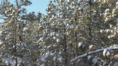 Forest Black Hills Spring Snow - stock footage