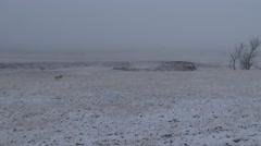 Pronghorn Antelope Buck Adult Lone Walking Winter Snow Prairie Fog Stock Footage