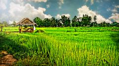 Khon Kaen, Thailand A  Rural Paddy Field And,Retreat From The Sun. Stock Photos