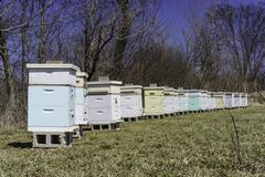 St. Charles, Kane County, Illinois, United States of America Apiary In Spring - stock photo