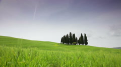 Small group of cypresses against a green field, Tuscany Stock Footage