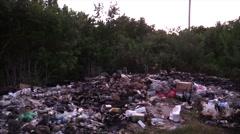 Raccoon Several Standing Dry Dusk Dump Garbage Trash Zoom In Spotlight Stock Footage