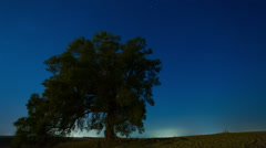 Timelapse of starry sky and stars moving over Lonely tree Stock Footage