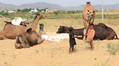 Two young boy and camel involved in Pushkar Camel Mela, India Stock Footage