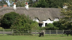 Cows on green in front of thatched cottages in new forest, england Stock Footage