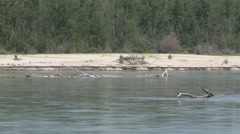 River & Stream Ponca State Park Summer Logs Wood Debris Sandbar Zoom Out Stock Footage