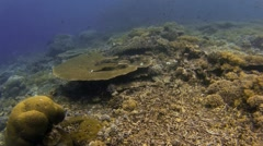 Table coral scenery Stock Footage