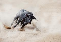 Bull charging across sand creating dust cloud Stock Photos