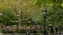 Pigeons Flock Birds Washington Square Park NYC Manhattan Freedom Flying Stock Footage