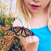 Girl looking at newly hatched monarch butterfly Stock Photos