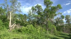 Forest  Summer Eastern Deciduous Forest - stock footage