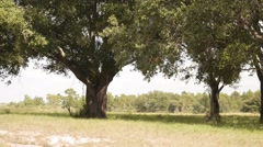 trees and grass - stock footage