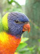 USA, Florida, Palm Beach County, West Palm Beach, Parakeet Stock Photos