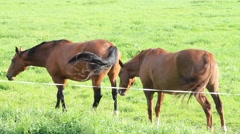 Horses in the meadow Stock Footage
