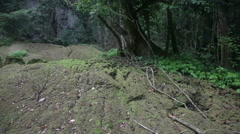 Jungle slider shhot 7139 Stock Footage