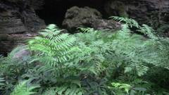 Jungle slider shhot 7032 Stock Footage