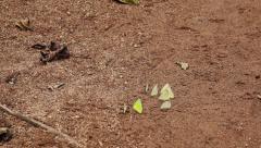 Butterflies on sand Stock Footage