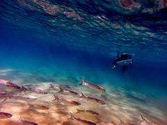 Shoal of fish swimming past surfer's legs - stock photo