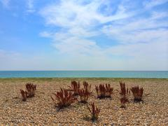 UK, England, West Sussex, Goring-by-Sea, Beach - stock photo