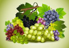 still life of grapes - stock illustration