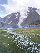 Mountains altai flowers lakes glaciers Stock Photos
