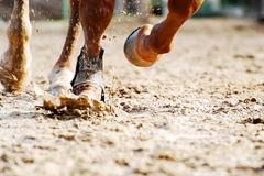 Low section of horse running Stock Photos