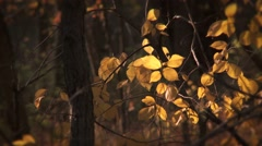 Autumn woods Close Up Stock Footage