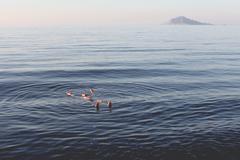 Italy, Aeolian Islands, Lipari, Man floating on water - stock photo