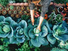 USA, California, Santa Clara County, Woman working in vegetable garden Stock Photos