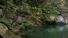 Pool of green water Stock Footage