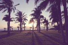 Silhouette of palm tress on beach - stock photo