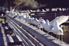 Seagulls perching on railing Stock Photos