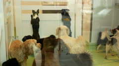A Daycare Facility For Dogs Stock Footage