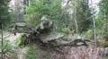 4k Autumnal moor tilt shelf and tree trunk root mountain range Harz 4k or 4k+ Resolution