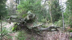 4k Autumnal moor tilt shelf and tree trunk root mountain range Harz - stock footage