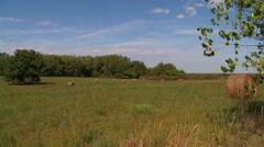 Kansas Hayfield summertime Stock Footage