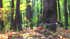 Dry grass and spider web on the background of autumn park. - stock footage