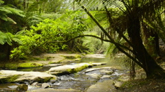 Otway national park Stock Footage