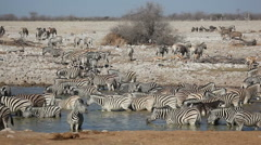 Zebra, wildebeest, springbok and kudu antelopes at a waterhole Stock Footage
