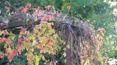 Colorful leaves in the autumn garden with dancing midges Stock Footage