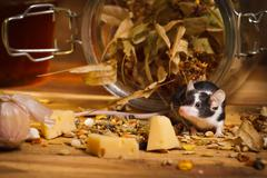 mouse in basement feel cheese - stock photo
