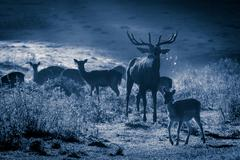 deer and herd at moonlight in autumn - stock photo