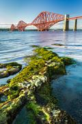 Close up seaweed and forth road bridge Stock Photos