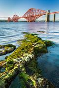 close up seaweed and forth road bridge - stock photo