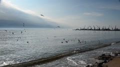 Pack of seagulls. This video is also in my portfolio in the HD format. Stock Footage