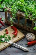 harvesting homegrown spices for spring meal - stock photo