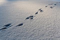 Footsteps on the snow in winter Stock Photos