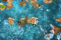 fallen leaves in the water pool - stock photo