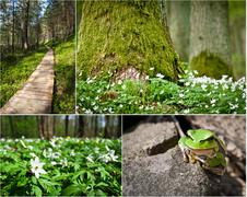 wildlife in the nature at spring - stock photo